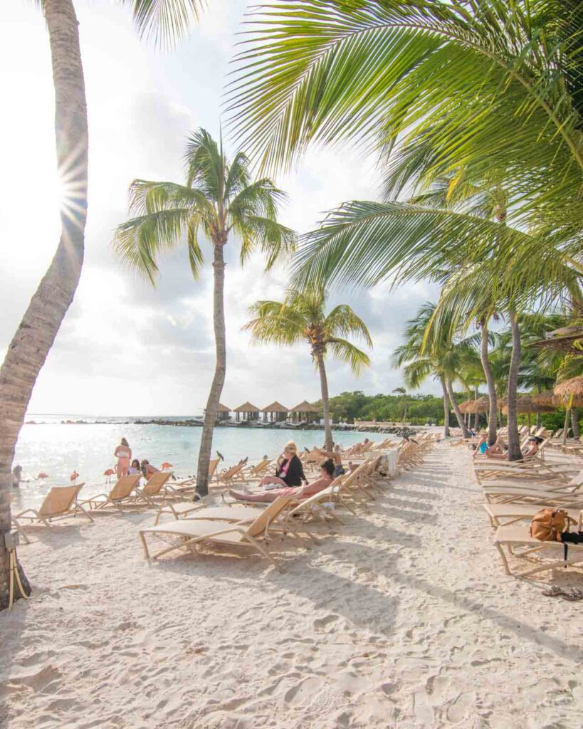 View of Flamingo Beach, showing lounge chairs and palm trees