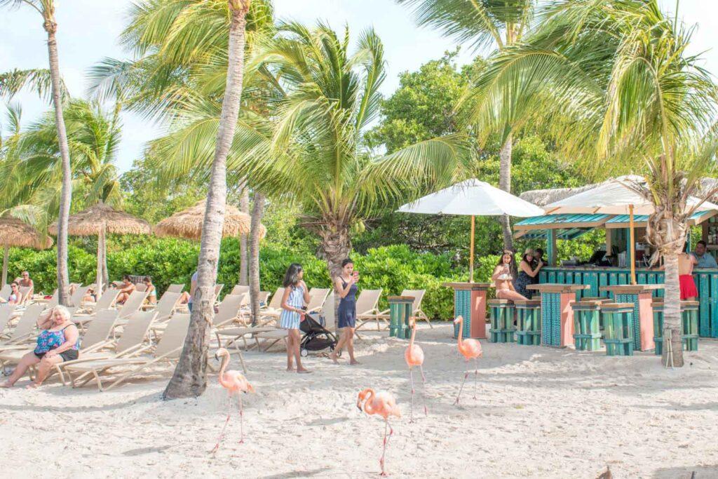 A view of Mangrove Beach Bar and the chaise lounge chairs on Flamingo Beach Aruba