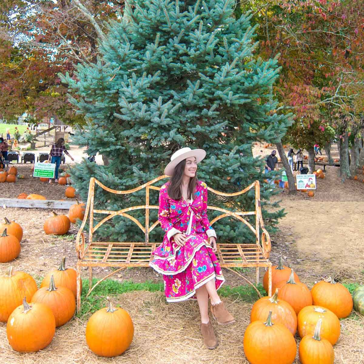 Woman sitting on bench in front of pumpkin patch
