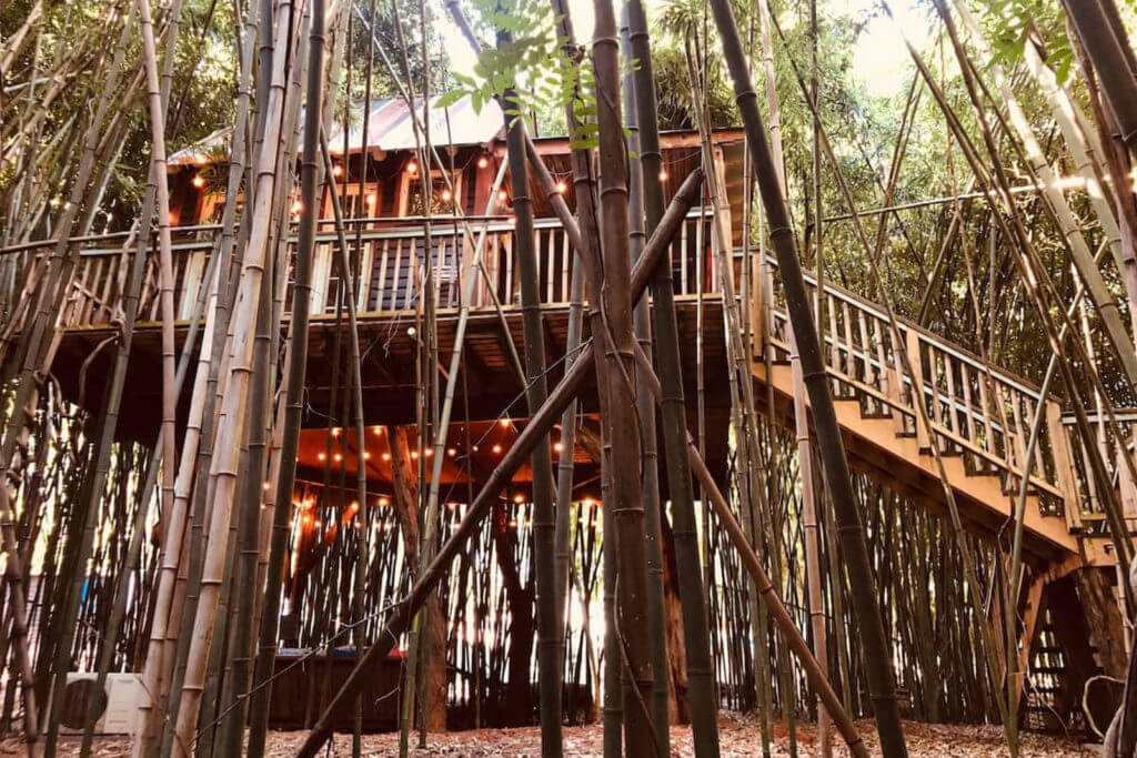 Side view of the Atlanta Alpaca Treehouse, surrounded by a Bamboo Forest