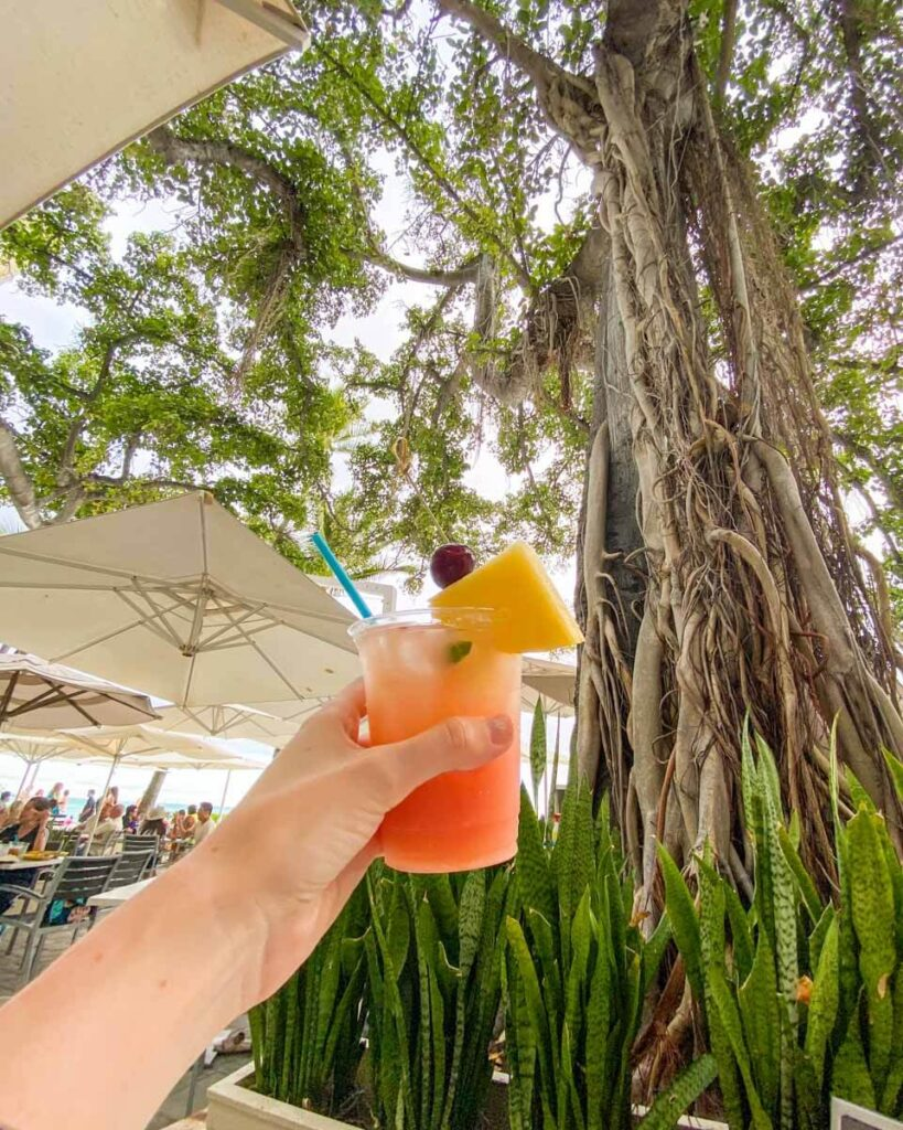 Cocktail under the banyan tree at the Moana Surfrider