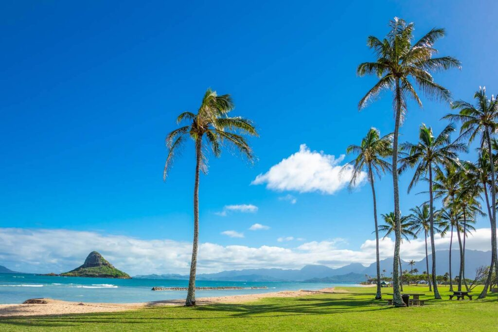View of Kualoa Regional Park, including palm trees and a view of Chinaman's Hat
